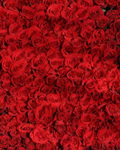 Миллион Роз в Южной Корее